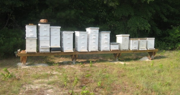 beehives-on-hive-stands