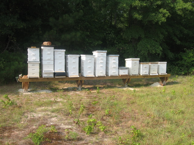 Beekeeper S Corner Parts Of The Hive Everything Country
