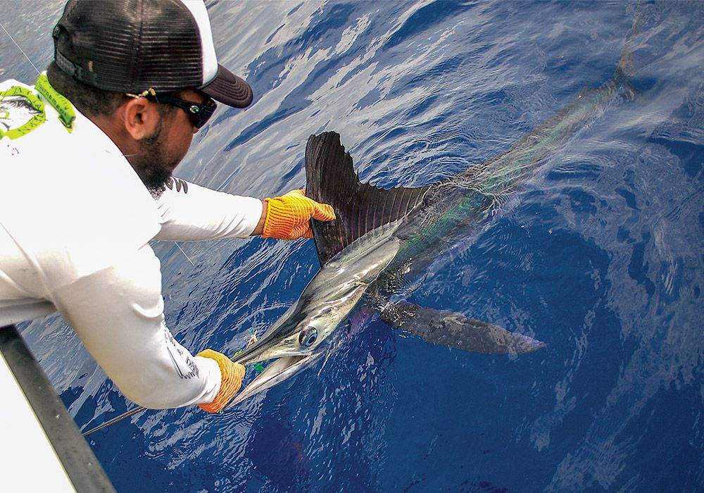 A venture offshore offers new species and new excitement.