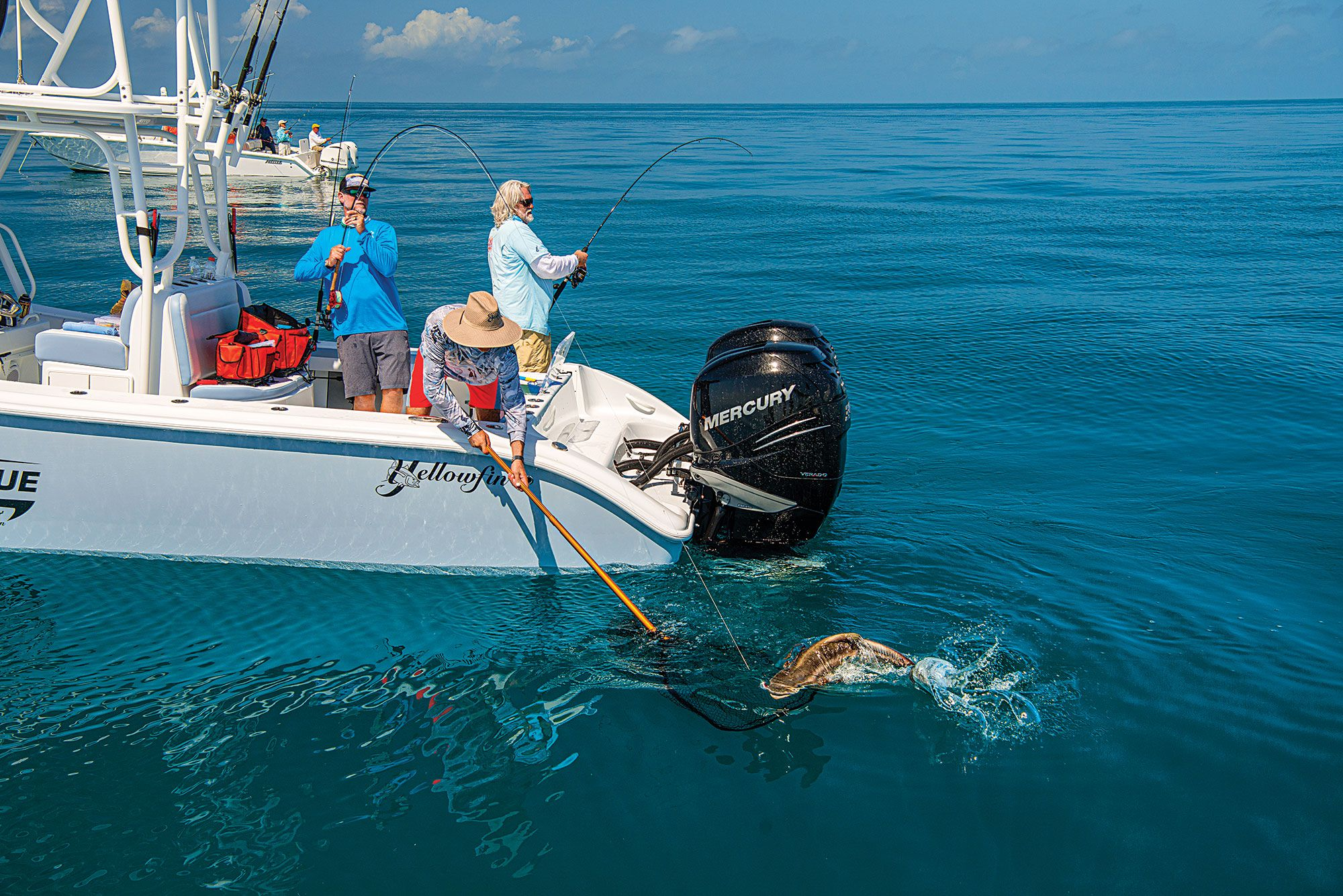 Schooling cobia provide opportunity for multiple hookups.